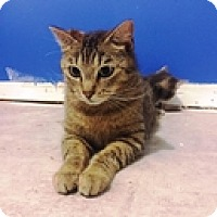 Adopt A Pet :: Sparky - Vancouver, BC