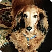 Adopt A Pet :: Mollie (Courtesy Listing) - Gig Harbor, WA