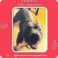 Adopt A Pet :: Teddy - nashville, TN