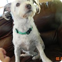 Adopt A Pet :: Abby - Umatilla, FL