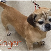 Dachshund/Pug Mix Dog for adoption in Greensboro, Maryland - Roger