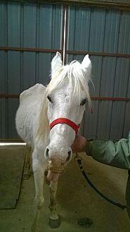 Quarterhorse Mix for adoption in Hitchcock, Texas - Temperance