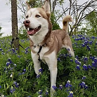 Adopt A Pet :: Malachi - Sugar Land, TX