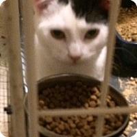 Adopt A Pet :: Sugar - Monroe, NY