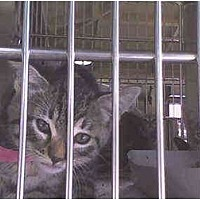 Adopt A Pet :: kittens kittens - Harbor City, CA