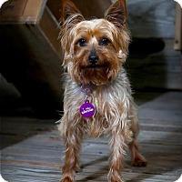 Adopt A Pet :: Mia - Valparaiso, IN