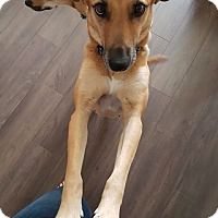 Adopt A Pet :: Momma - Adoption Pending - Mississauga, ON