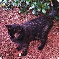 Adopt A Pet :: GiGi - Acworth, GA