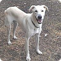 Adopt A Pet :: Jax - Eddy, TX