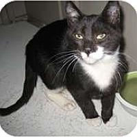 Adopt A Pet :: Adam - Shelton, WA