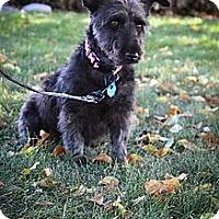 Adopt A Pet :: Miss Kay - Broomfield, CO