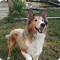 Adopt A Pet :: Durango - Abingdon, MD