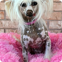 Adopt A Pet :: Maggie - Bridgeton, MO