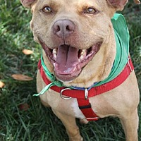 Adopt A Pet :: Zach- Lucky Dog Rescue - Fredericksburg, VA