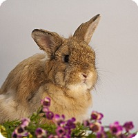 Adopt A Pet :: Cashew - Williston, FL