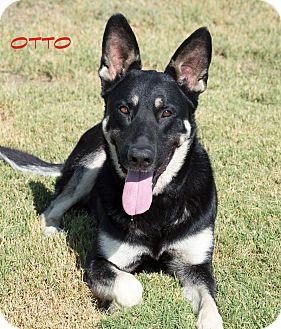 German Shepherd Dog/Labrador Retriever Mix Dog for adoption in Patterson, California - Otto