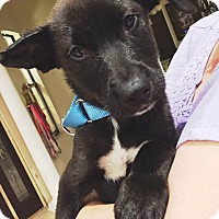 Adopt A Pet :: Jack II - Clearwater, FL