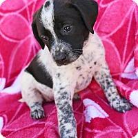 Adopt A Pet :: Lagertha - Washington, DC