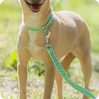 Adopt A Pet :: CANDY - Santa Monica, CA