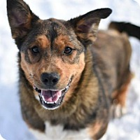 Adopt A Pet :: Dannie - Dodson, MT