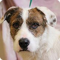 Adopt A Pet :: Chester - Roosevelt, UT