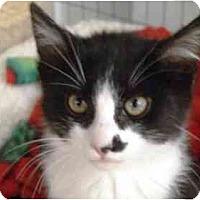 Adopt A Pet :: Bullet - Scottsdale, AZ