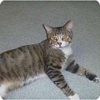 Adopt A Pet :: Mac - Hamburg, NY