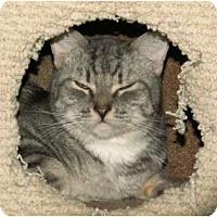 Adopt A Pet :: Niki - Scottsdale, AZ