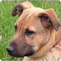 Adopt A Pet :: Hoss - Rigaud, QC