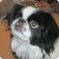 Adopt A Pet :: Willow - Aurora, CO