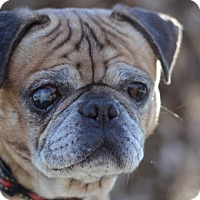 Adopt A Pet :: Sir Humphries - Pismo Beach, CA