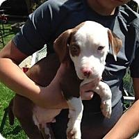 Adopt A Pet :: Jack - Toledo, OH