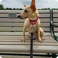 Adopt A Pet :: Chickpea ~ Bond Girl! - Caldwell, NJ