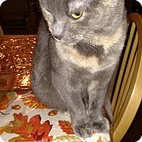 Adopt A Pet :: Chelsea - Covington, PA