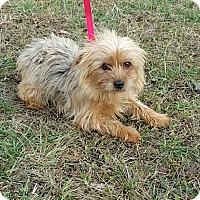 Adopt A Pet :: Molly - Staunton, VA