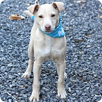 Adopt A Pet :: Biscuit - West Grove, PA