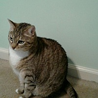 Adopt A Pet :: Aine - Parkton, NC