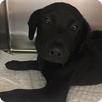Adopt A Pet :: Yasmin - Royal Palm Beach, FL