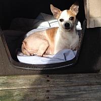 Adopt A Pet :: Mae-Mae - Shannon, GA