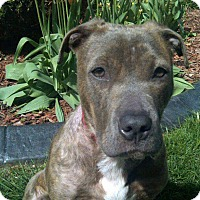Adopt A Pet :: Addy - West Allis, WI