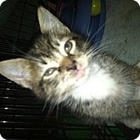 Adopt A Pet :: BART&BENSON - Clay, NY