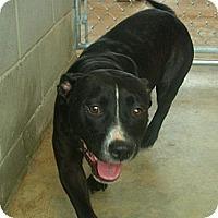 Adopt A Pet :: Elvira - dawson, GA