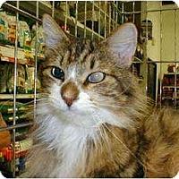 Adopt A Pet :: Benjamin - Proctor, MN