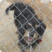 Adopt A Pet :: Thor - Albany, NY