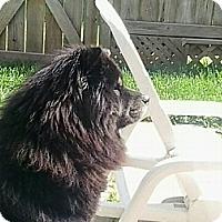 Adopt A Pet :: Casey - Tillsonburg, ON