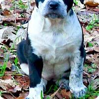 Adopt A Pet :: Maddelyn sweet, mellow - Sacramento, CA