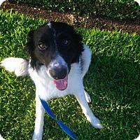 Adopt A Pet :: Howdy - Austin, TX