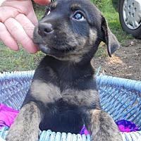 Adopt A Pet :: *Sprinkles - PENDING - Westport, CT