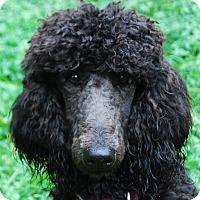 Adopt A Pet :: Dori - Adoption Pending - Gig Harbor, WA