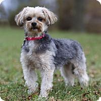 Adopt A Pet :: MAGGIE - Ile-Perrot, QC